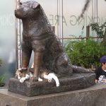 le-chat-de-hachiko